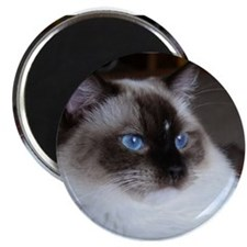 Unique Cats ragdoll Magnet
