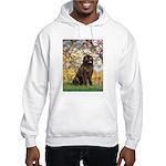 Spring / Newfoundland Hooded Sweatshirt
