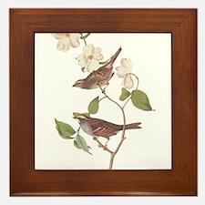 Audubon White Throated Sparrow Original Framed Til