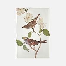 Audubon White Throated Sparrow Original Magnets