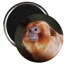 Golden Lion Tamarin Magnet