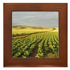 Camino green field Framed Tile