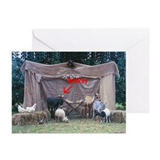 Donkey in the Manger Greeting Cards (Pk of 10)