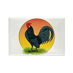 Sunrise Dutch Bantam Rectangle Magnet (100 pack)