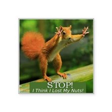 "squirrel lost his nuts 2 Square Sticker 3"" x 3"""