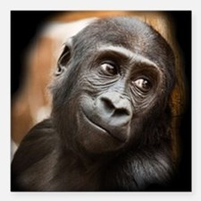 "Smiling Gorilla Baby Square Car Magnet 3"" x 3"""