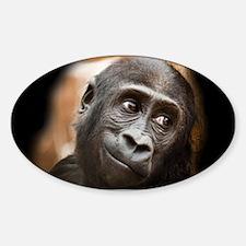 Smiling Gorilla Baby Decal