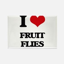 I Love Fruit Flies Magnets