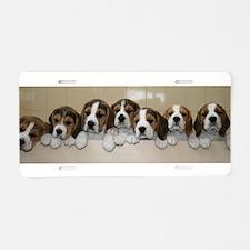 beagle puupies Aluminum License Plate