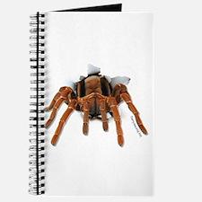 Spider Burster Journal