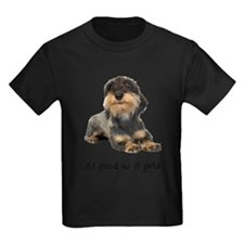 FIN-wirehaired-dachshund-good.png T