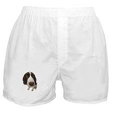 FIN-springer-spaniel-closeup.png Boxer Shorts