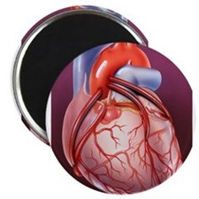 Cute Heart surgery Magnet