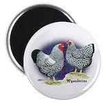 Silver Wyandotte Chickens 2.25