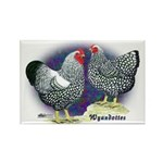 Silver Wyandotte Chickens Rectangle Magnet (10 pac