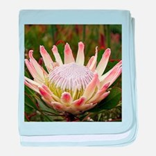 South African Protea flower in bloom baby blanket