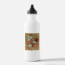 Eggs in a Nest Water Bottle