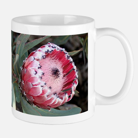 South Africa Protea flower in bloom in garden Mugs