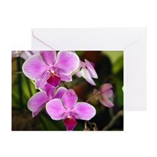 orchids - flowers greetingcards (6)