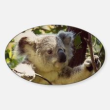 Sweet Baby Koala Decal