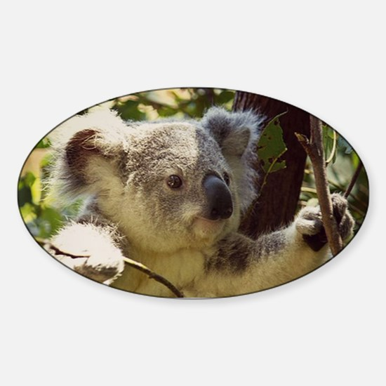 Sweet Baby Koala Decal