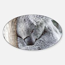 Sleeping Koala baby Decal