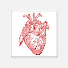 Anatomical Heart - Red Sticker