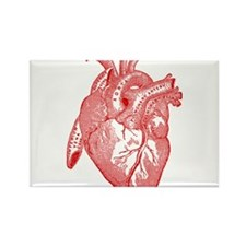 Anatomical Heart - Red Magnets