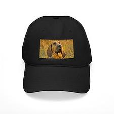 bloodhound Baseball Hat