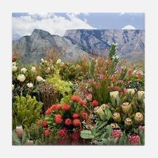 South African flower display in bloom Tile Coaster