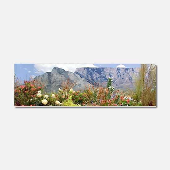 South African flower display in Car Magnet 10 x 3