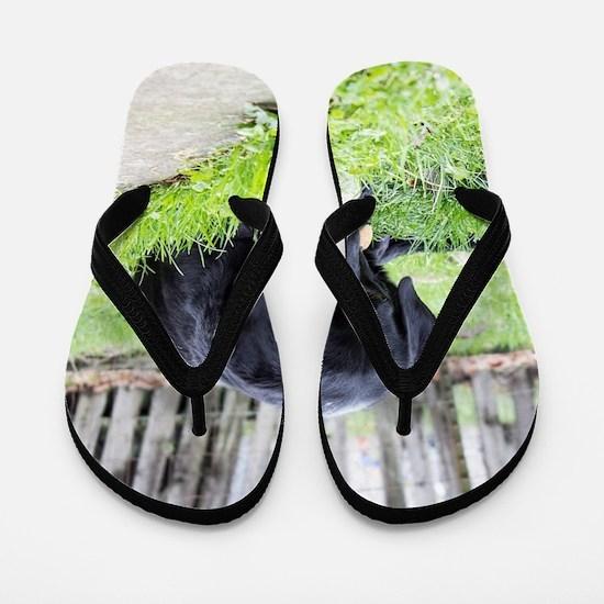 Toy Flip Flops