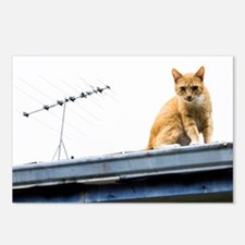 Antenna Cat Postcards (Package of 8)