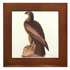Juvenile Bald Eagle Framed Tile