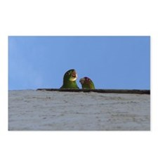 Parrots Pair Greeting Card Postcards (Package of 8