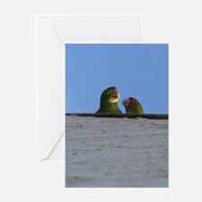 Wild Parrots Greeting Card Greeting Cards