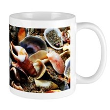 Beach Shells Mugs