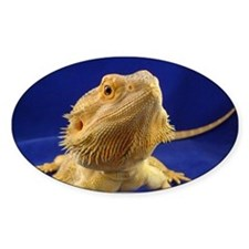 Bearded Dragon Decal