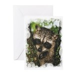 Baby Raccoon Greeting Cards (Pk of 20)