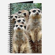 Meerkat 002Q Journal