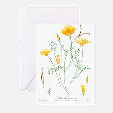 California dune poppy (Eschscholzia californica) G