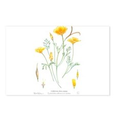 California dune poppy (Eschscholzia californica) P
