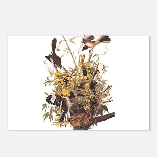 Audubon's Mocking Bird Postcards (Package of 8)