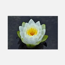 Single white water lily Magnets