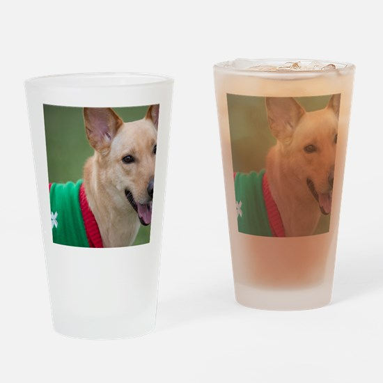 Funny Dingo Drinking Glass