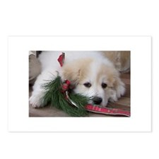 Pyr Pup -- Postcards (Package of 8)