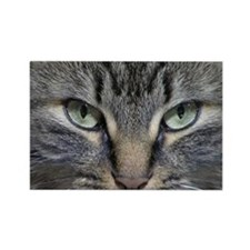 Unique Cat eye Rectangle Magnet (10 pack)