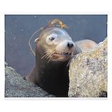 Sea lion Duvet Covers