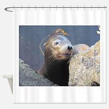 Sea Lion Having Fun Shower Curtain