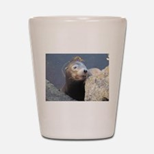 Sea Lion Having Fun Shot Glass